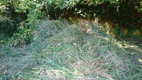 大量に積まれた雑草たち
