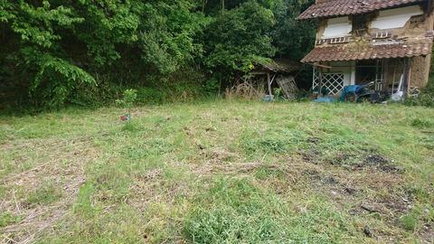 草刈り後の庭1