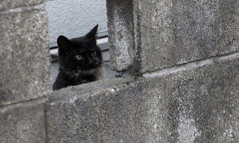 隠れる黒猫ちゃん