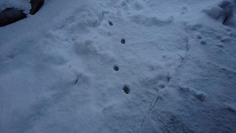モモちゃんの足跡