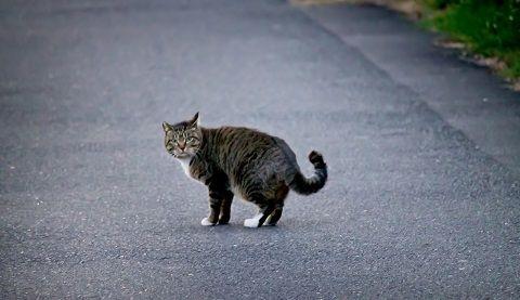 去り際に振り返る猫ちゃん