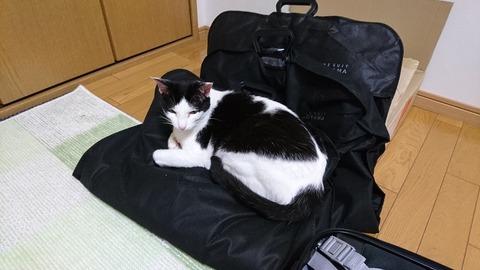 スーツの袋に座るモモちゃん