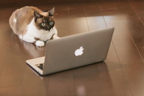 PC閲覧中の猫