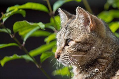 遠くを見据える猫