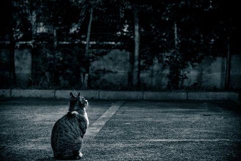 cat_014