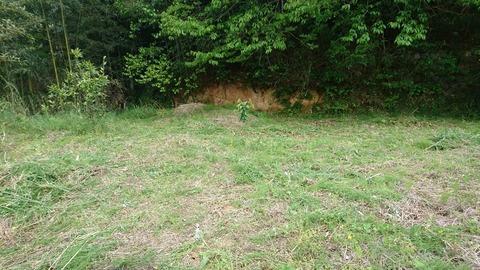 草刈り後の庭2