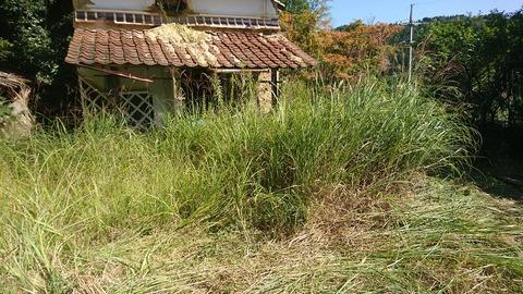 草が生い茂る蔵の前②