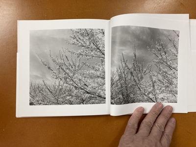 川廷昌弘写真集 『芦屋桜』2
