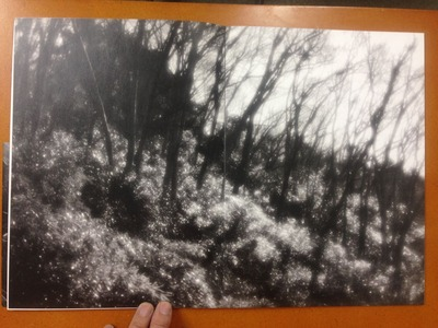 平林達也写真集『白い花』4
