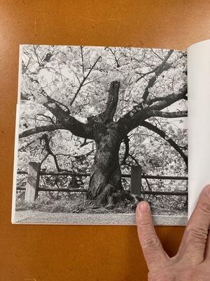 川廷昌弘写真集 『芦屋桜』1