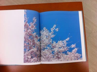 鈴木理策写真集『hysteric eight / Suzuki Risaku』3