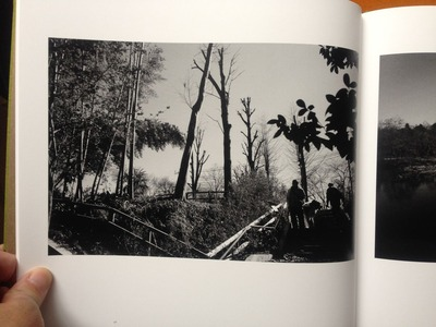 安井直博写真集『木の東京』5
