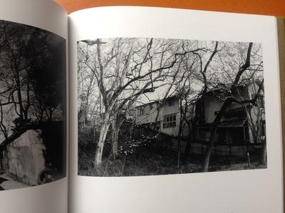 安井直博写真集『木の東京』6