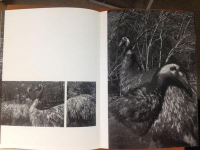 櫻井尚子写真集『鳥ーDromaius』3