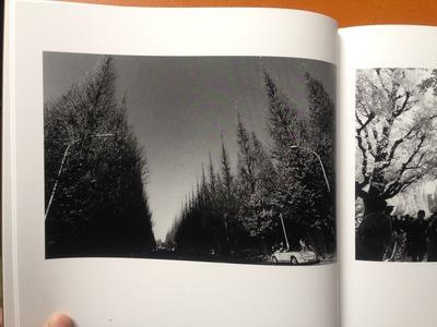 安井直博写真集『木の東京』3