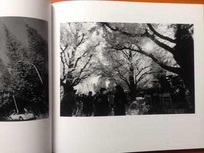 安井直博写真集『木の東京』4