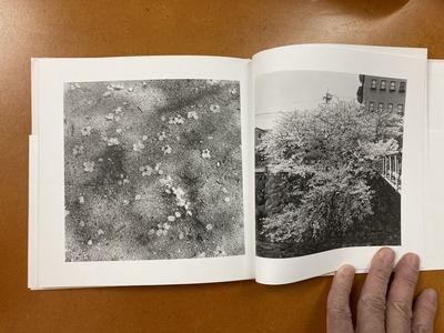 川廷昌弘写真集 『芦屋桜』3