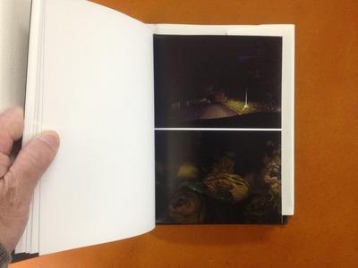 野村佐紀子写真集『Flower』3