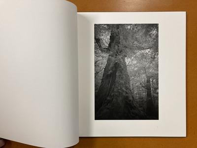 荒井信雄写真集 『幻影 原生林—屋久島』1