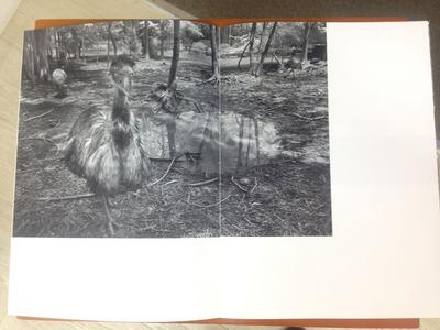 櫻井尚子写真集『鳥ーDromaius』1