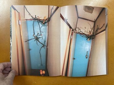 Sumire Sakuma写真集 『The Branches』2