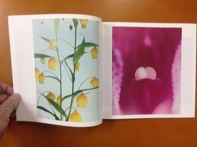 小林洋美写真集『flower's』2