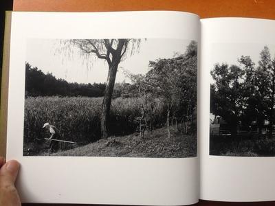 安井直博写真集『木の東京』1
