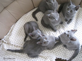 kittens 2011・6