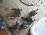 ekika-kitten-2011-10-1