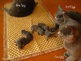 ekika-kitten-2011-8-5
