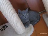 theressa-kitten2011-10-2