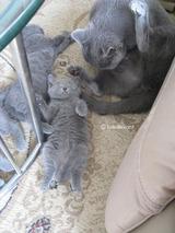 ekika-kitten-2011-9-2