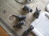 ekika&theressa-kitten-2011-10-3