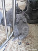 ekika-kitten-2011-9-1