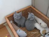 ekika-kitten-2011-9-5