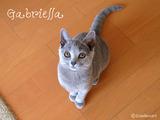 gabriella2011-8