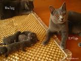 ekika-kitten-2011-8-6