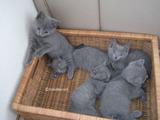ekika&theressa-kitten-2011-9-1