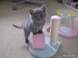 theressa-kitten2011-9-2