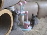 ekika-kitten-2011-2