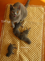 ekika-kitten-2011-8-2