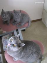 theressa-kitten2011-9-6