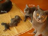 ekika-kitten-2011-8-3