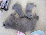 theressa-kitten2011-9-3