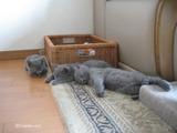 ekika&theressa-kitten-2011-10-4