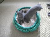 theressa-kitten2011-9-7