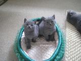 theressa-kitten2011-9-8