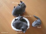 daisy-erika-kittens2