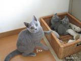 ekika-kitten-2011-9-4