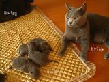 ekika-kitten-2011-8-4
